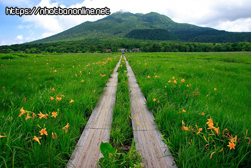 Cao nguyên Ozegahara - tỉnh Gunma Japan