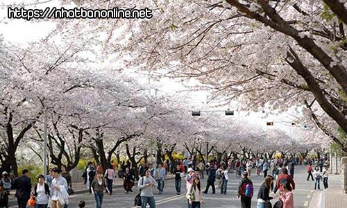 Công viên Gongen-yama - tỉnh Ibaraki Nhật Bản
