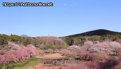 Công viên Hitachi - tỉnh Ibaraki Japan