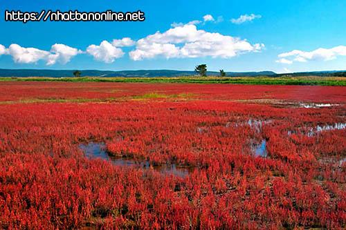Đồng cỏ san hô ở hồ Notoro - tỉnh Hokkaido Japan