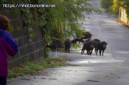 Người dân quay trở lại khu từng nhiễm phóng xạ ở tỉnh Fukushima Nhật Bản