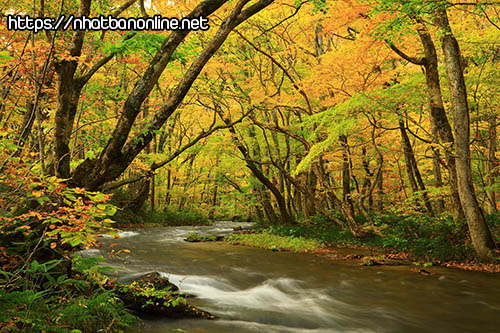 Thung lũng Oirase - tỉnh Aomori Nhật Bản