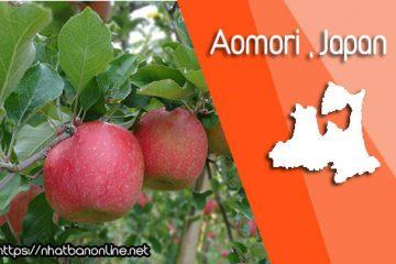 Tỉnh Aomori Japan – táo và những cánh đồng đầy nghệ thuật