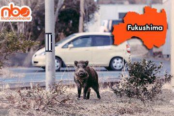 Tỉnh Fukushima Japan – vùng đất của sự trở về