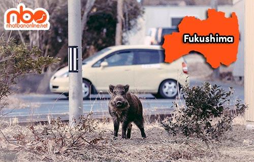 Tỉnh Fukushima Japan