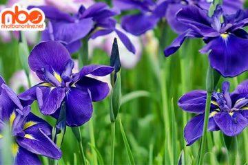 Tỉnh Ibaraki Japan – vườn hoa của Nhật Bản