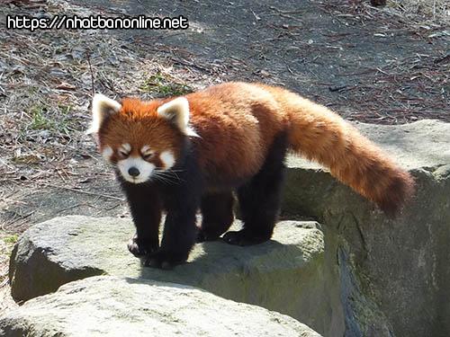 Sở thú Akita Omoriyama tỉnh Akita Japan - Vườn thú Milve