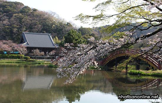 Đôi nét về tỉnh Kanagawa Japan