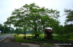 Tỉnh Iwate Japan