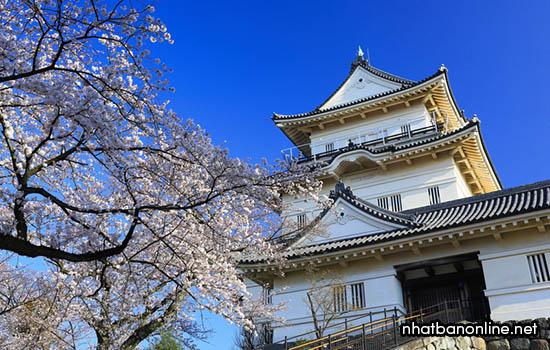 Tỉnh Kanagawa Japan