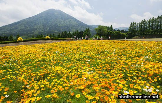 Cao nguyên Ikoma - tỉnh Miyazaki Japan