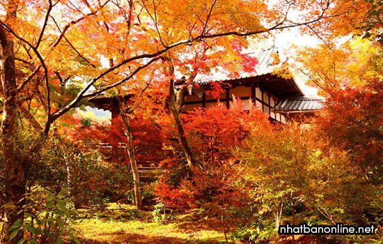 Chùa Hokyo-in - tỉnh Kyoto Japan