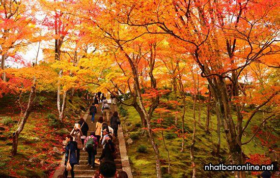 Chùa Jojakko-ji - tỉnh Kyoto Japan