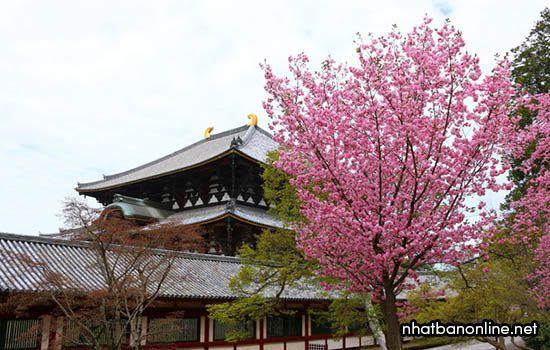Chùa Todai-ji - tỉnh Nara Japan