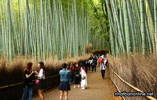 Con đường xuyên rừng trúc Sagano - tỉnh Kyoto Japan