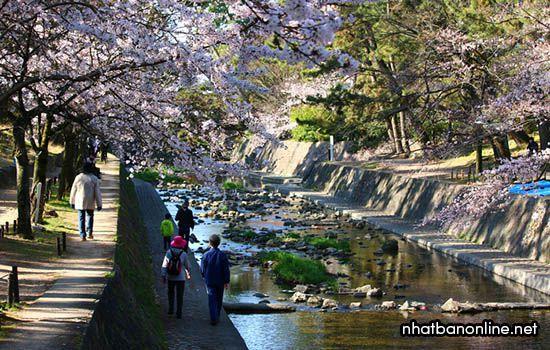 Công viên Shukugawa - tỉnh Hyogo Japan