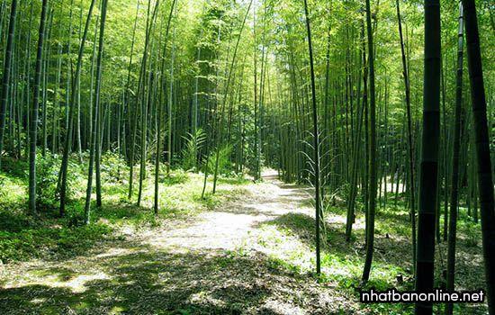 Công viên thiên nhiên Tatsuda - tỉnh Kumamoto Japan