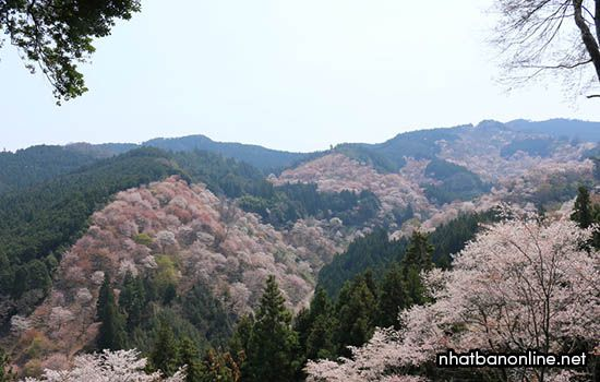 Núi Yoshino - tỉnh Nara Japan