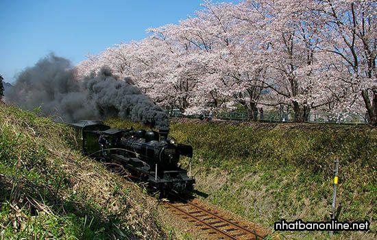 Tàu hơi nước Hitoyoshi - tỉnh Kumamoto Nhật Bản