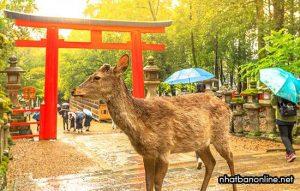 Tỉnh Nara Japan - công viên Nara