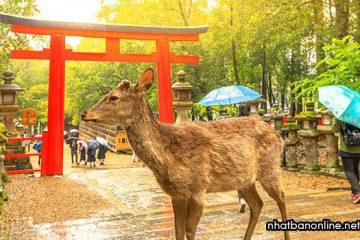 Tỉnh Nara Japan – cố đô của Nhật Bản