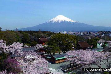 Tỉnh Shizuoka Japan – vùng đất nổi tiếng với núi Phú Sĩ và wasabi