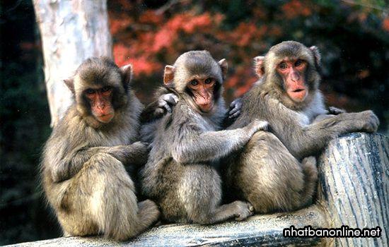 Vườn thú tự nhiên Takasakiyama - tỉnh Oita Nhật Bản