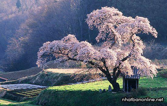 Khí hậu của Nhật Bản, những điều bạn nên biết