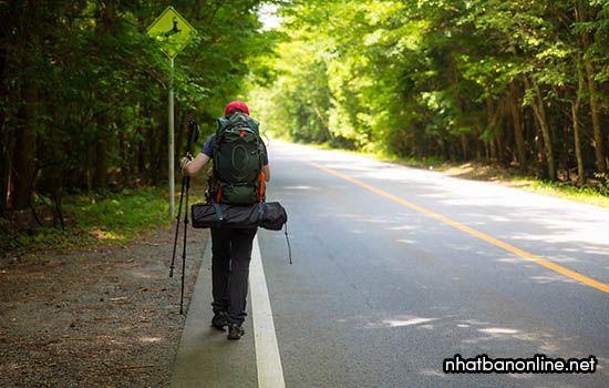Càng đi sâu vào rừng Aokigahara càng vắng dấu chân người