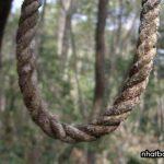 16 bí ẩn rừng Aokigahara ở Nhật Bản