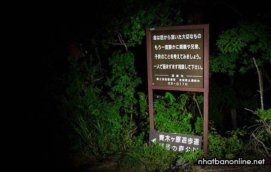 Khác nước ngoài rất thích thám hiểm rừng Aokigahara vào ban đêm