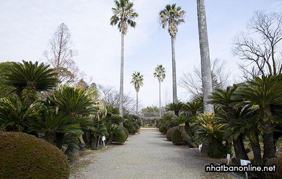 Vườn thực vật Kenmotsudai